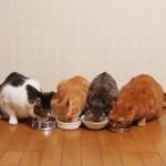 猫ちゃんの年齢とお食事の注意ポイント