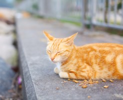 Street cat eating food