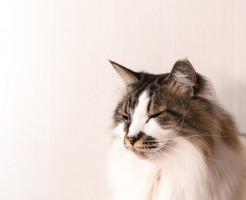 ■被写体の猫は飼っている猫です。